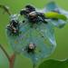 beetles gone wild
