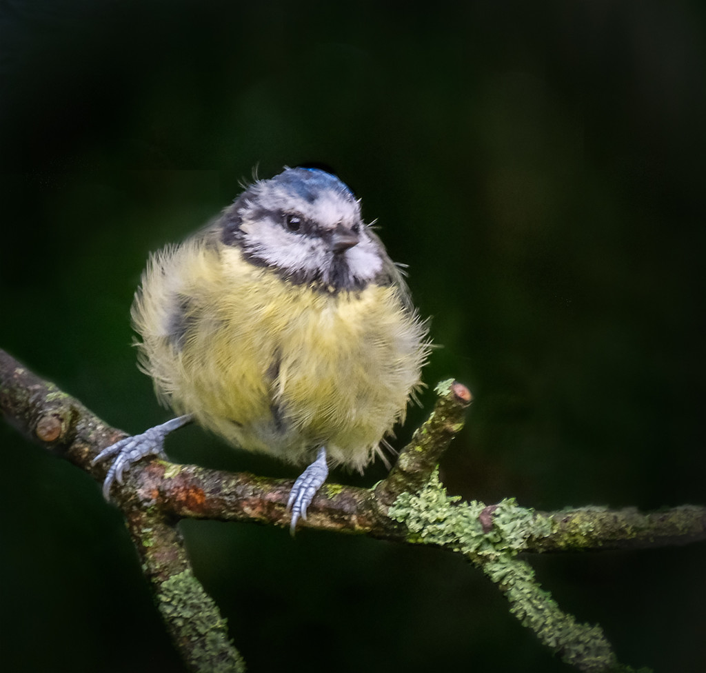 Bedraggled by inthecloud5