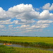 Kayaking in the marsh on a summer afternoon near Mount Pleasant, SC by congaree