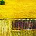 fields  by pistache