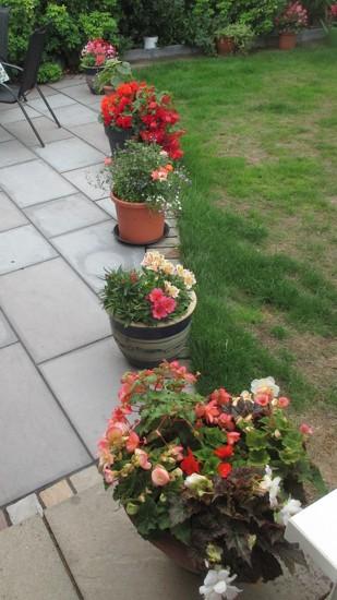Patio Flowers by g3xbm