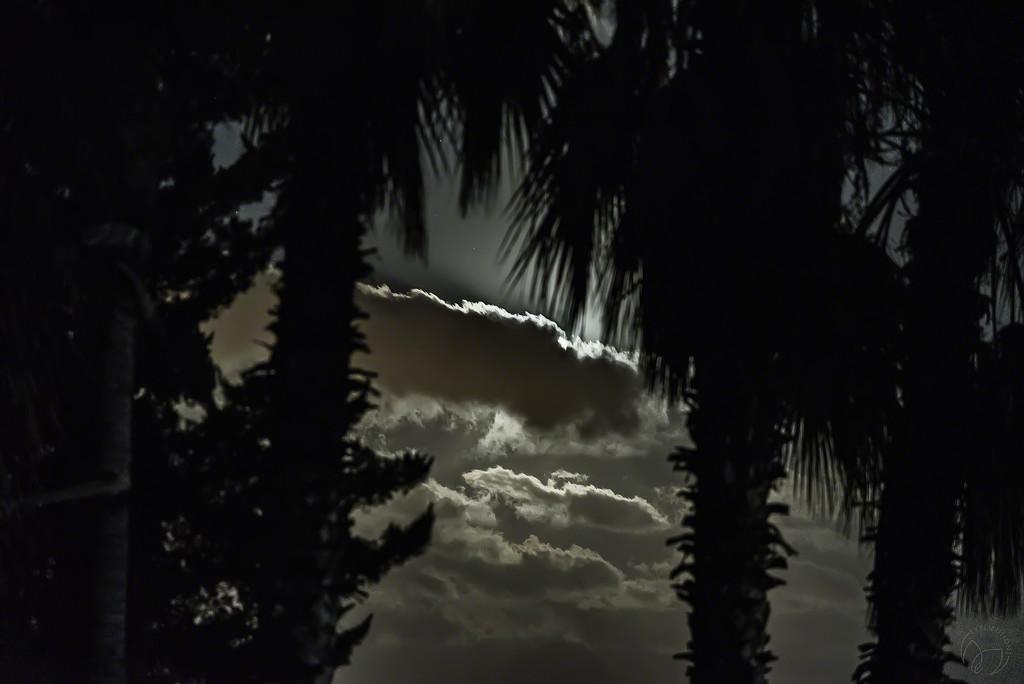 Night Framing by evalieutionspics