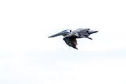18th Aug 2018 - Pelican in flight