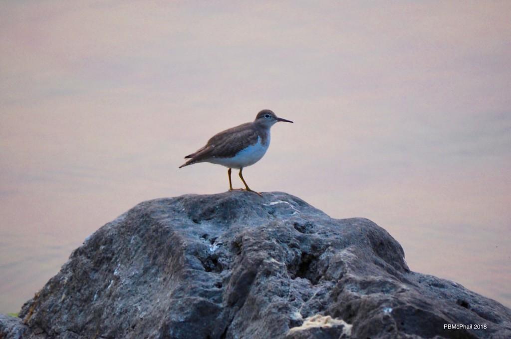 Mystery Bird by selkie