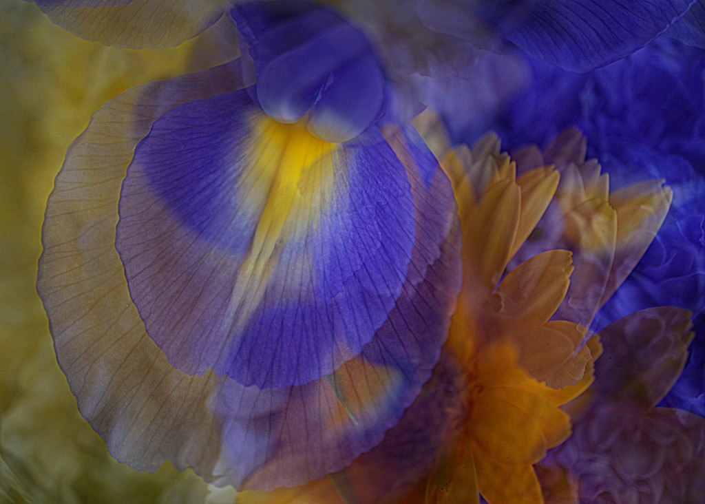 abstract in blue and yellow by quietpurplehaze