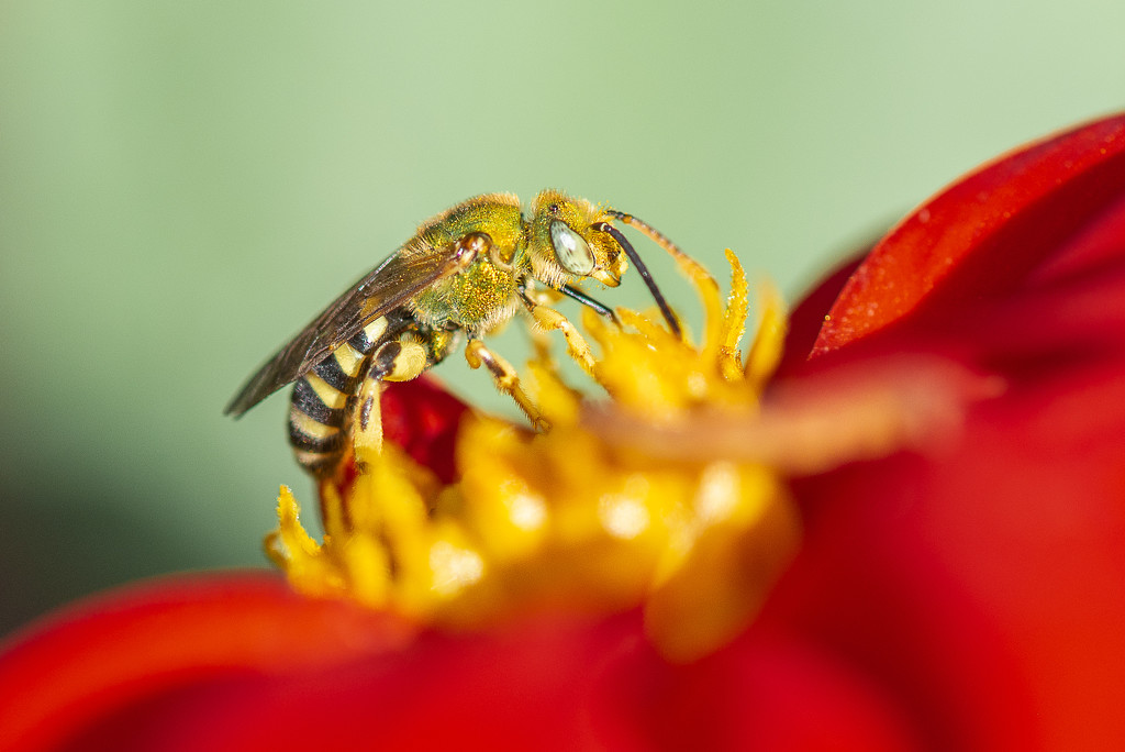 Searching for the Best Pollen by taffy