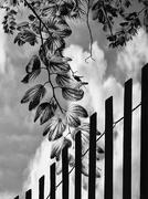 20th Aug 2018 - Thy neighbors fence