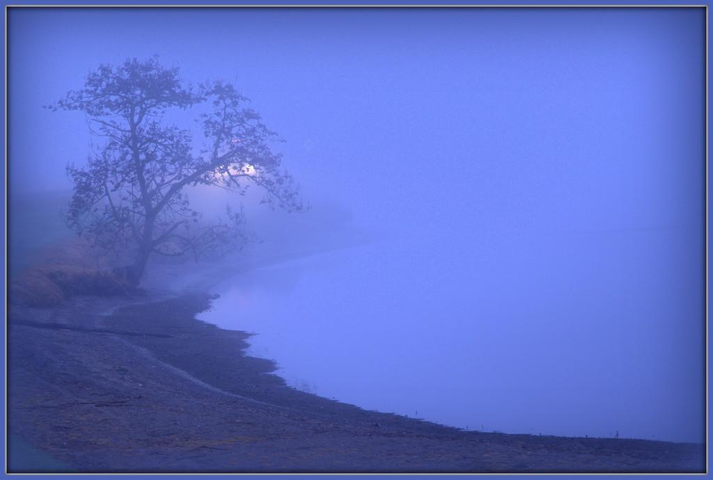 Waikato fog by dide