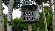 20th Aug 2018 - Bird Townhouse