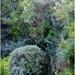 Garden Web