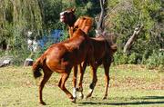 22nd Aug 2018 - Gif Horseing around