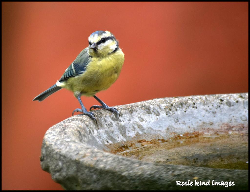 Isn't he a gorgeous little chap by rosiekind