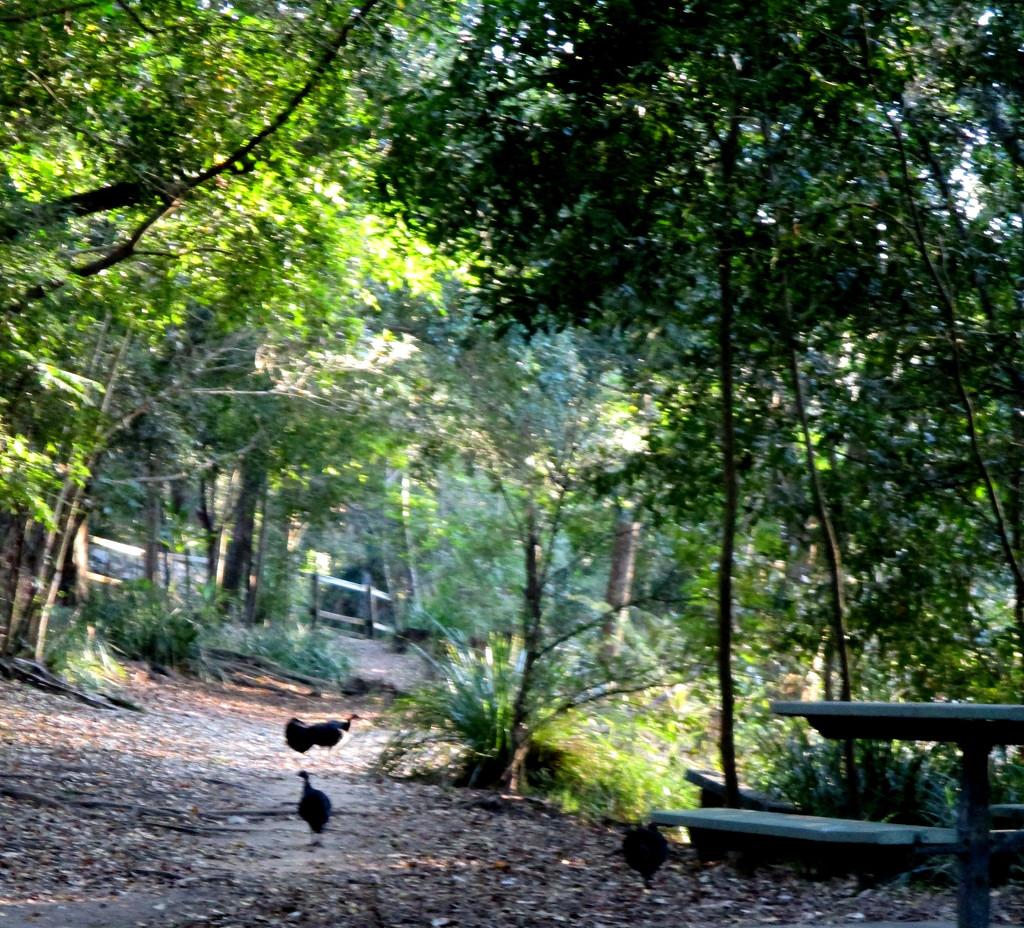 Wild turkeys along the Creek by 777margo
