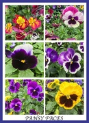 24th Aug 2018 - Pansy Faces