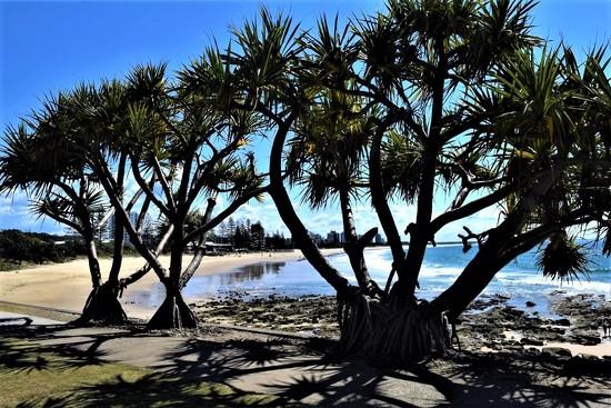 Through the Pandanus Palms.... by happysnaps