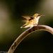 baby hummer by samae