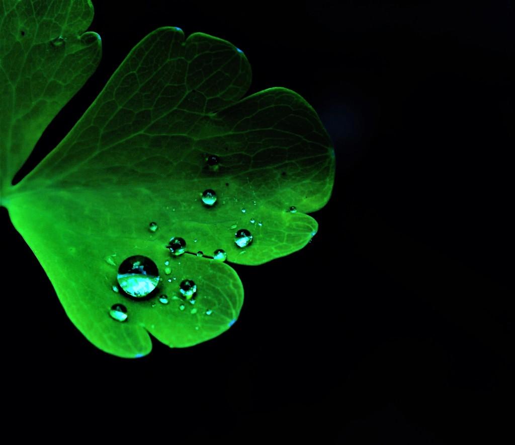 Raindrops I by madeinnl