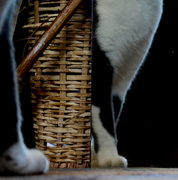 25th Aug 2018 - Scout, the Mirror, and the Basket