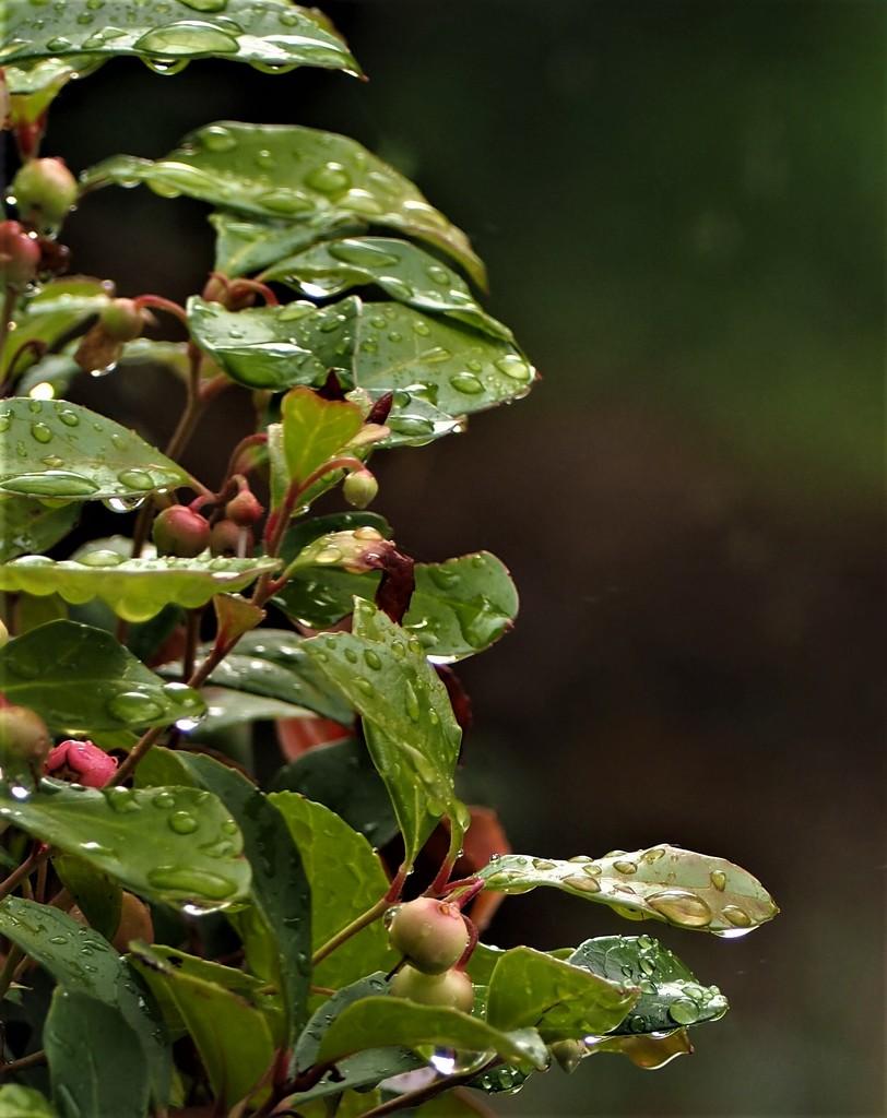 Raindrops keep falling by jacqbb