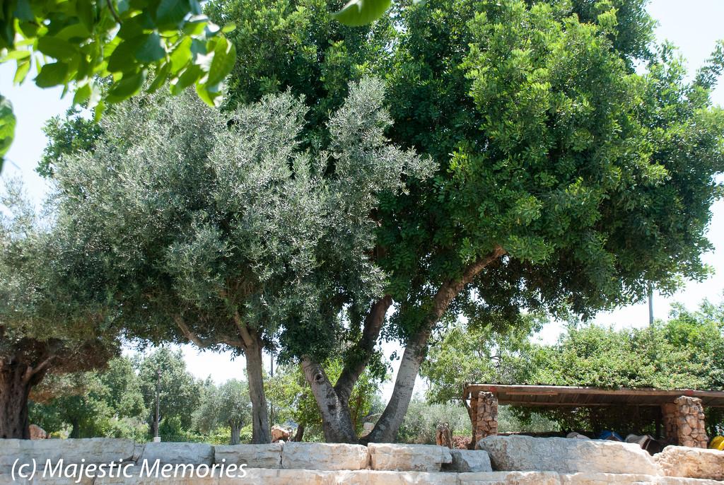 Kfar Kedem visit-11 by mgbio