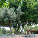 Kfar Kedem visit-11
