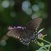 Bokeh and Butterflies by milaniet
