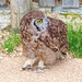 Gif - Spotted Eagle Owl by ludwigsdiana