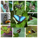 Butterflies at Symmonds Yat by susiemc