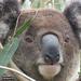 the boss by koalagardens