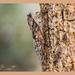 Cicada by carolmw