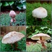 22 1/2 hours in the life of two mushrooms by louannwarren