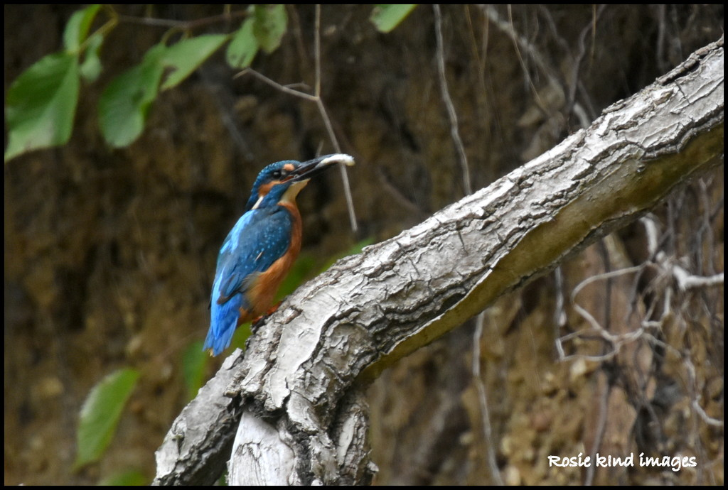 Will his youngsters ever leave the nest? by rosiekind