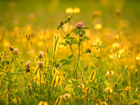 On the meadow by haskar