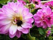 29th Aug 2018 - Seeking nectar or shelter ?