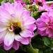 Seeking nectar or shelter ? by beryl