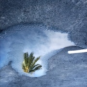 28th Aug 2018 - Little palm in the big puddle