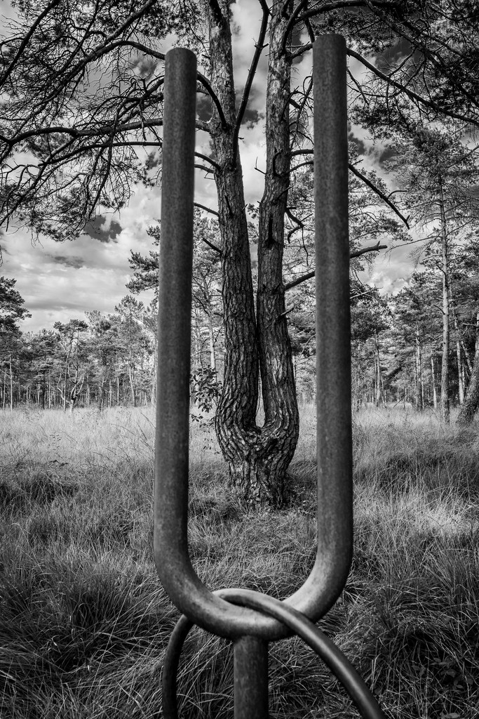 Paimpont 2018: Day 195 - Art Mirroring Nature... by vignouse