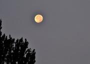 29th Aug 2018 - Morning Moon