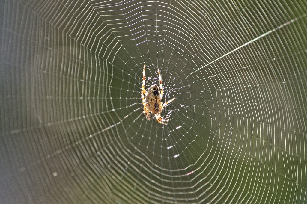 Spider's Web by billyboy