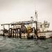 Pulling the mussel strings aboard. by swillinbillyflynn