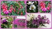 31st Aug 2018 - Garden colours