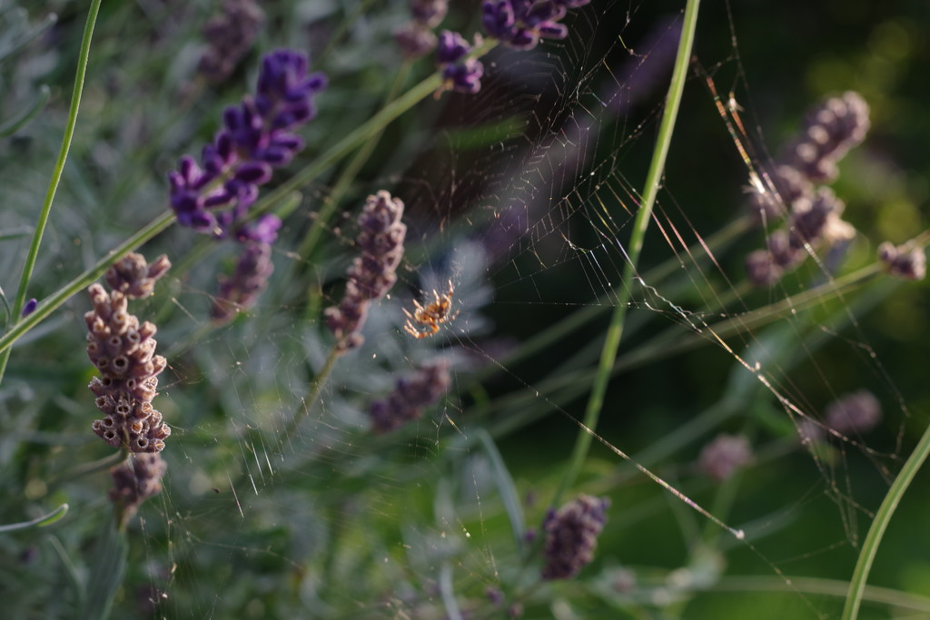 Spinning The Golden Threads of Autumn  by 30pics4jackiesdiamond