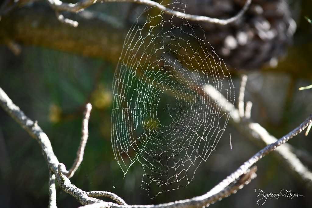 What a wicked web we weave! by kgolab