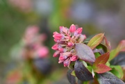 2nd Sep 2018 - Beautiful Flower