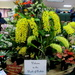 Nambour Orchid show