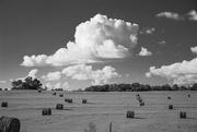 2nd Sep 2018 - Hay field in B&W...