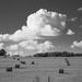 Hay field in B&W...