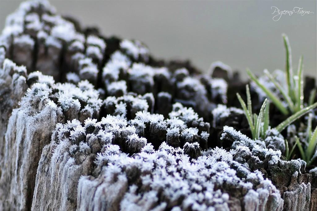 A little Frosty by kgolab