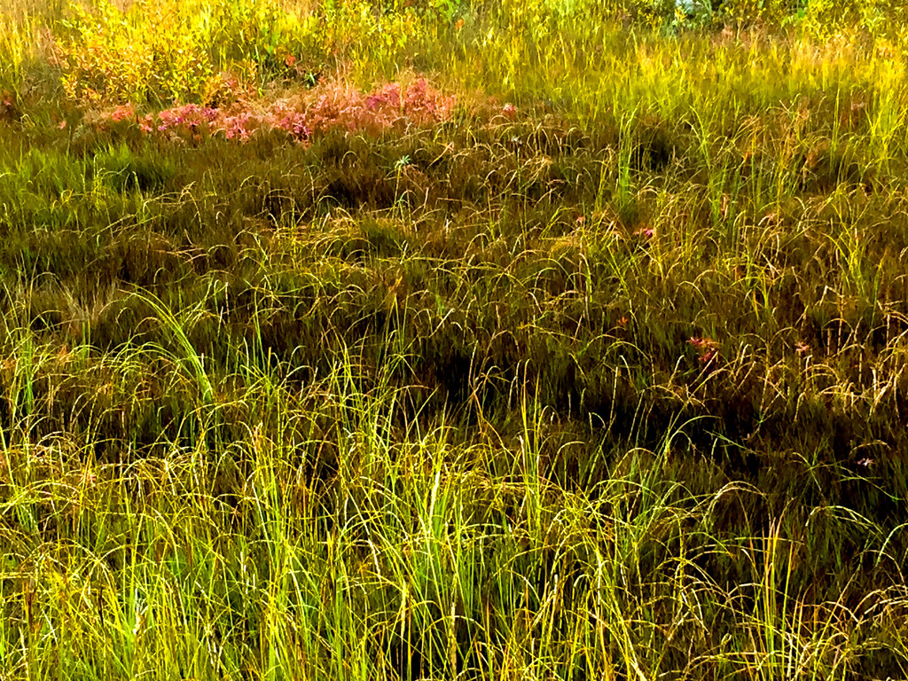 Graceful Grasses by jetr
