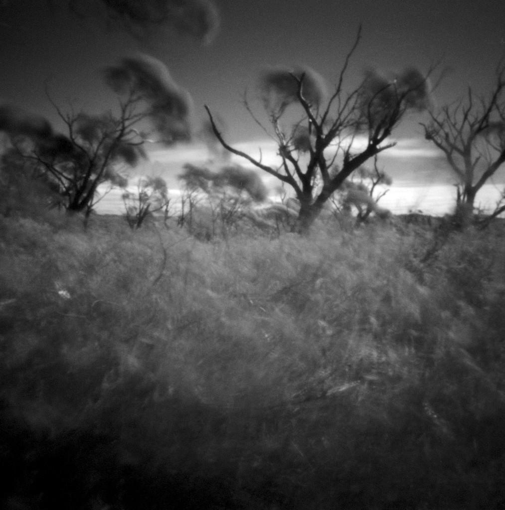 Wind song by peterdegraaff